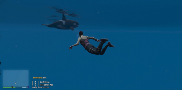 Swimming with the orca's