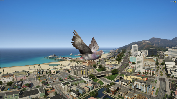 City View out as a bird